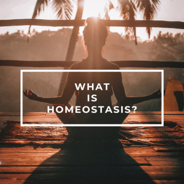 What is homeostasis?