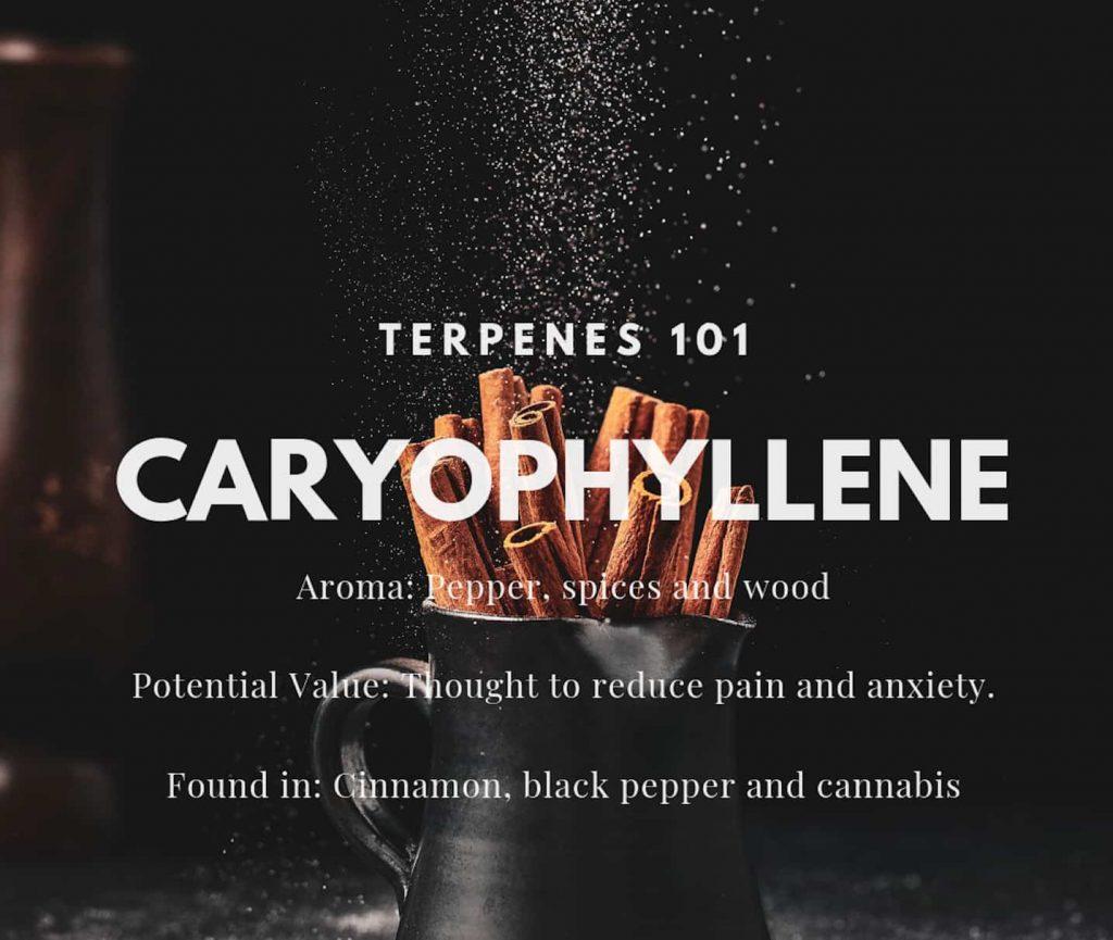 caryiphyllene terp