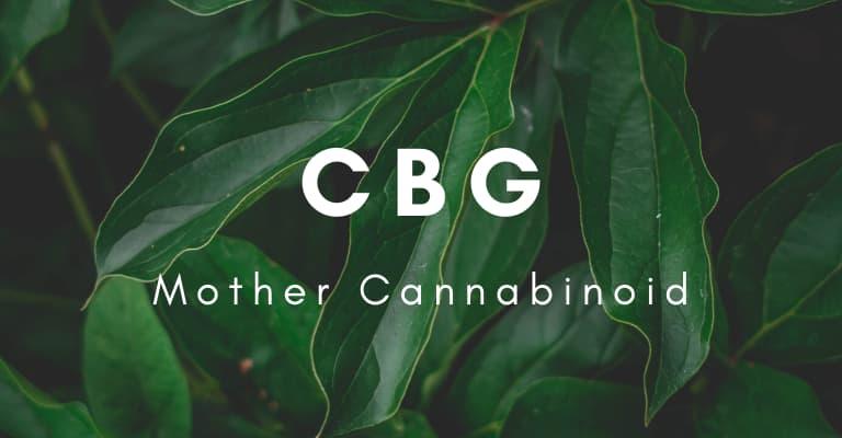CBG Mother Cannabinoid