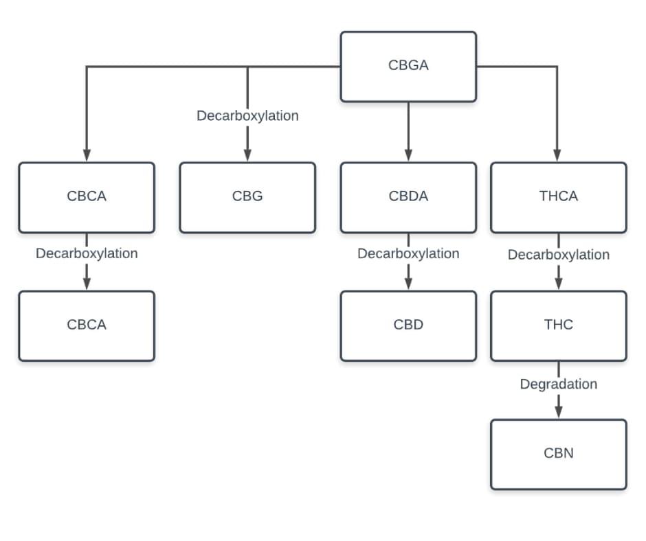 cannabinoid acids to cannabinoids