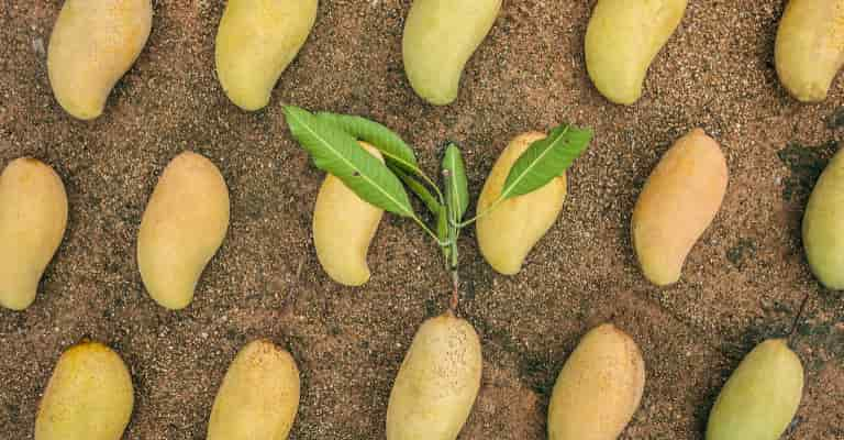 breakfast cbd smoothie mangos