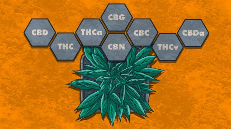 The Entourage Effect & The Synergies Of Cannabis